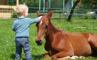 familienreiten_pferde_kinder1